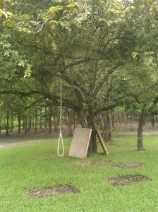 The Noose / Swing?