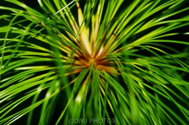 decorative-grass