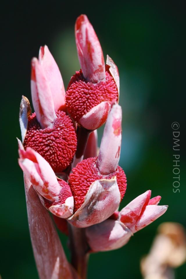 randon-flower