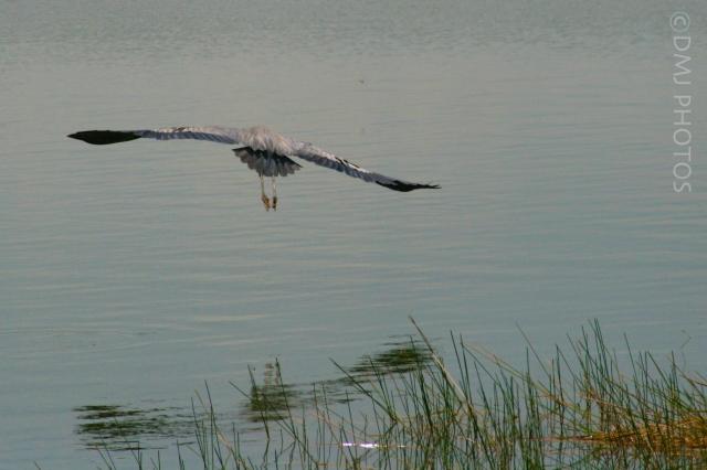 taking-flight